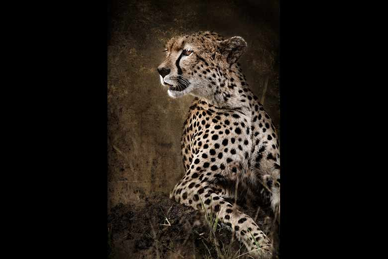 artistic rendering of cheetah leaning on hill
