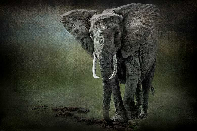 artistic rendering of a single elephant and rocks