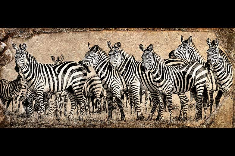 artistic rendering of a herd of zebra