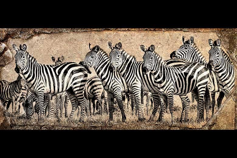 artistic rendering of a herd of zebra