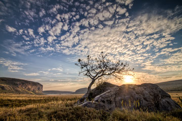 sun rising over rock and tree in central canyon of Hells Gate Park, Kenya