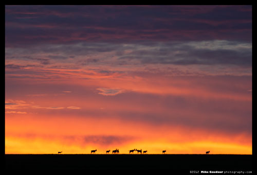 dramatic sunrise behind herd of topi