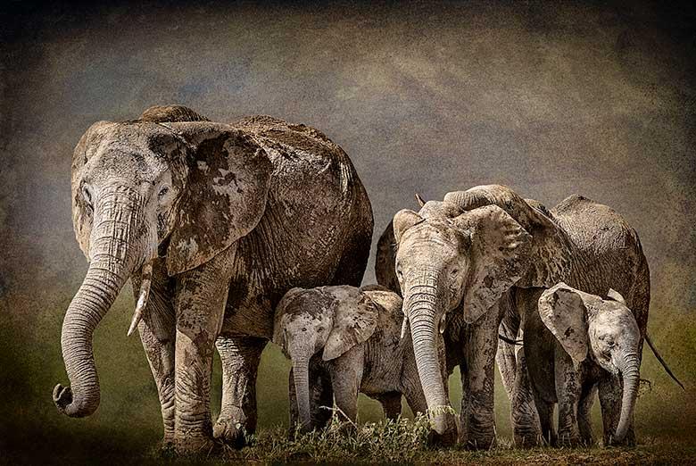 artistic rendering of elephants moving across savannah