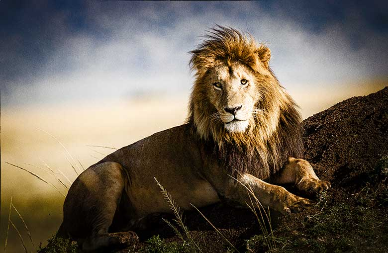 artistic rendering of a regal lion laying on a termite mound