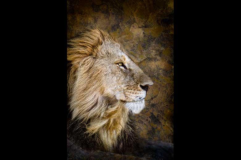 artistic rendering of regal male lion profile