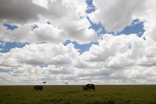 unaltered RAW image of elephants and clouds